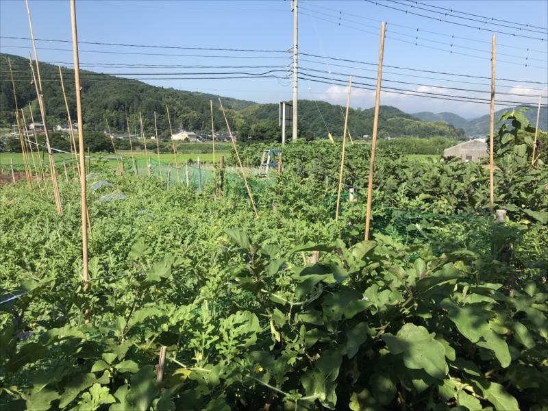 2018年7月の田畑