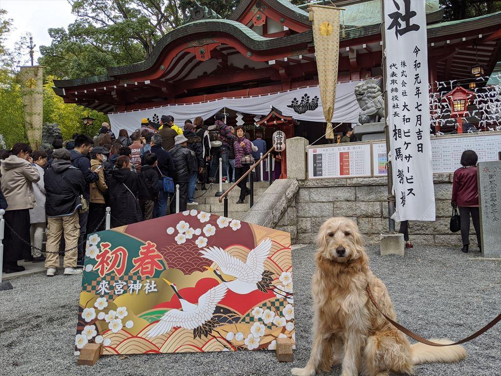 初詣 来宮神社