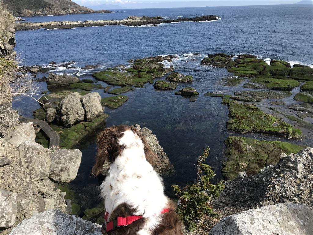 ハリーと散歩! 恵比須島