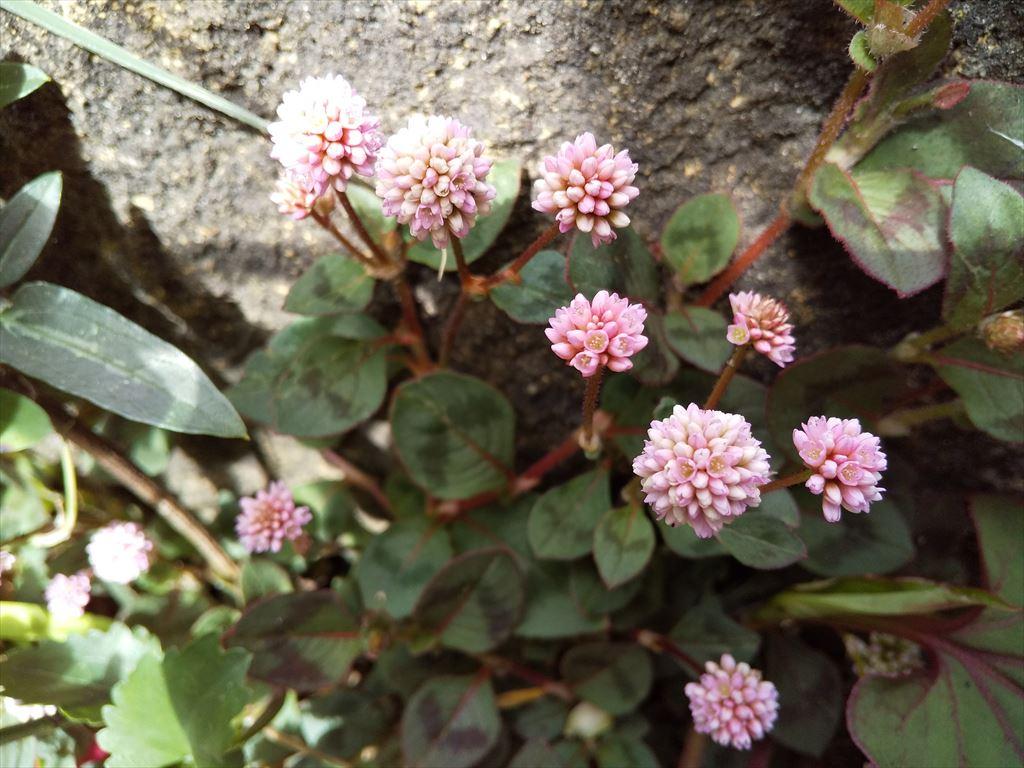 庭で咲く春の花ばな