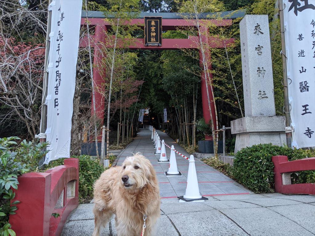 初詣・来宮神社