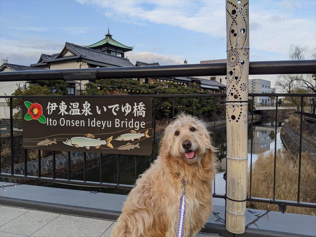 まるを連れて松川遊歩道の散歩