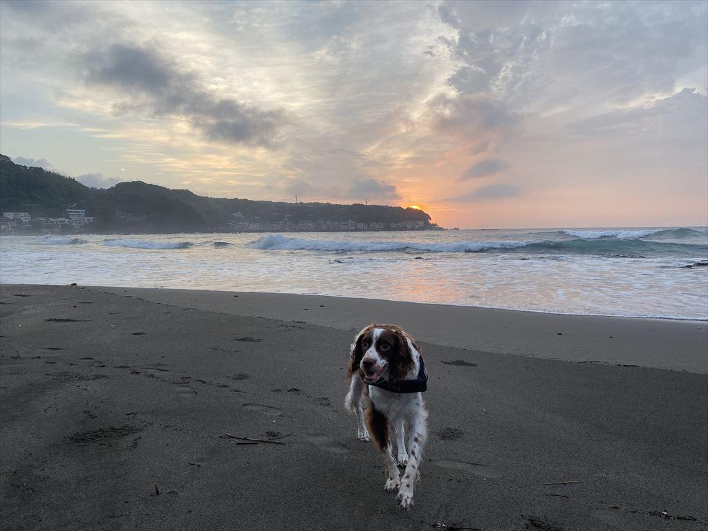 早朝の散歩!