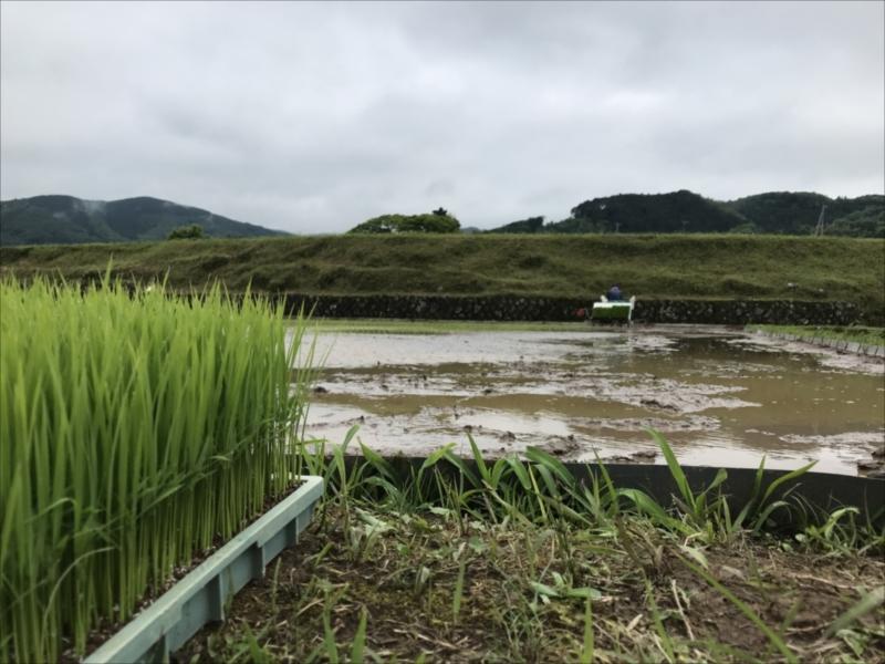 2018年田植え