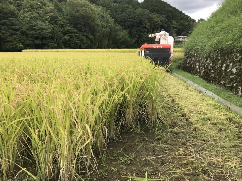 2018年稲刈り