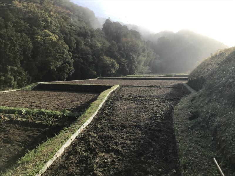 2018年11月の田畑