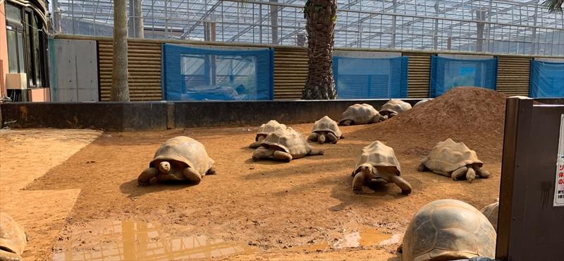 ちょっと特殊な動物園「iZoo」