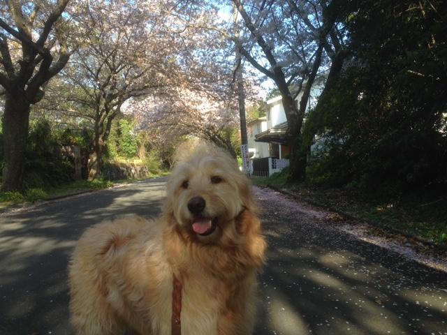 まるを連れて城ケ崎海岸へ散歩