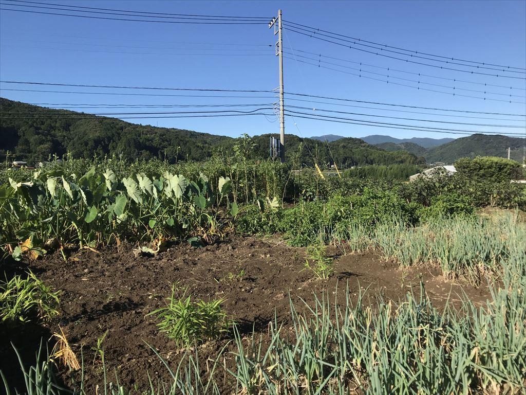 2019年10月の田畑