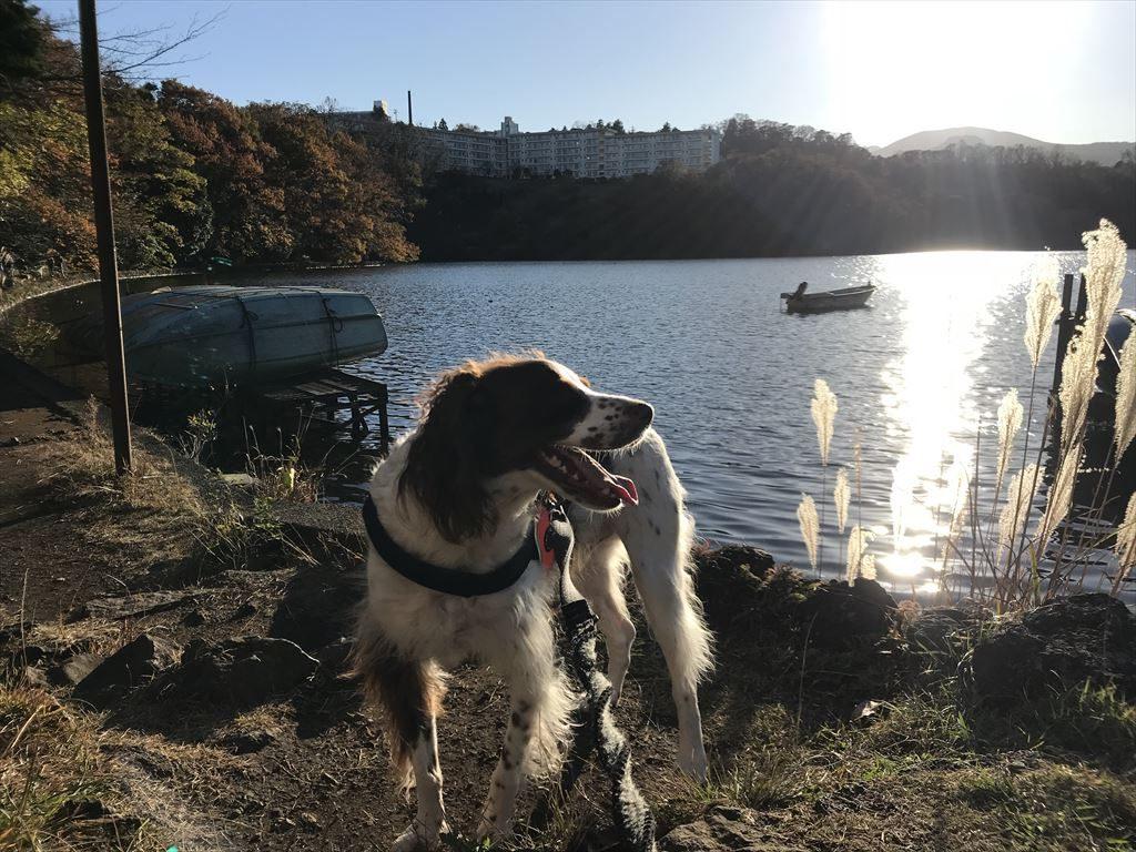 ハリーと一碧湖へ 散歩