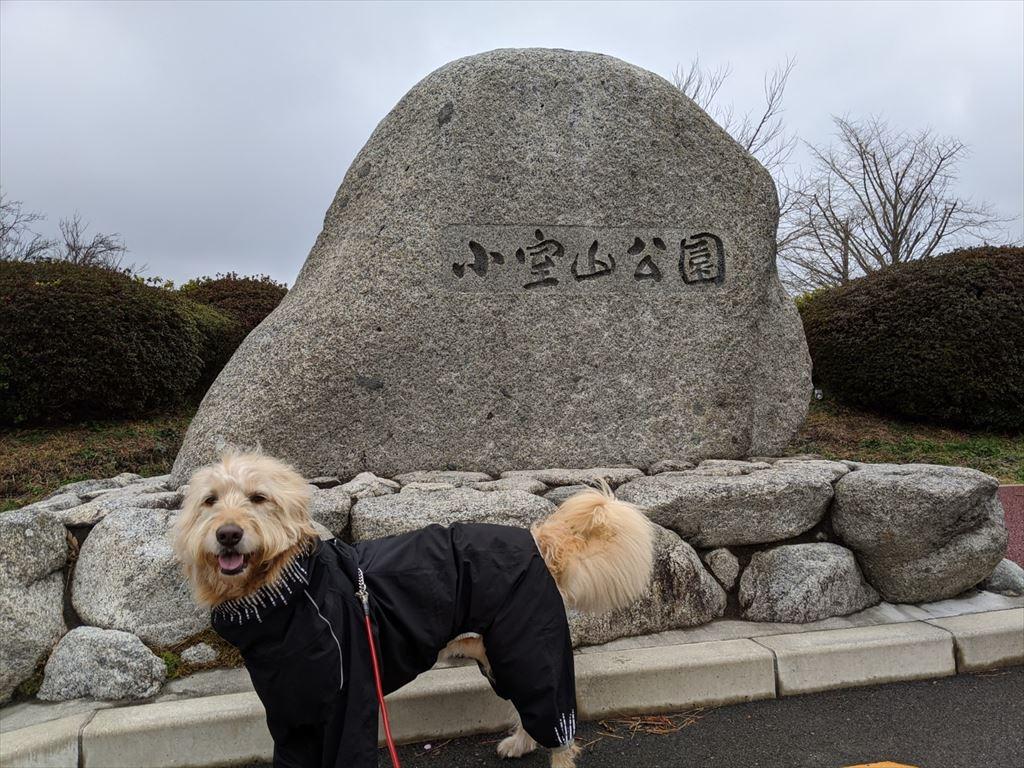 小室山散歩 休日の楽しみは雨でも