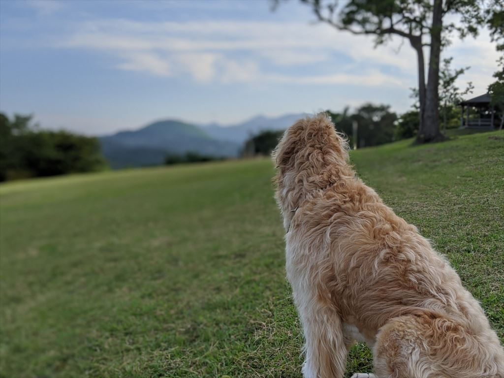 小室山の犬友達