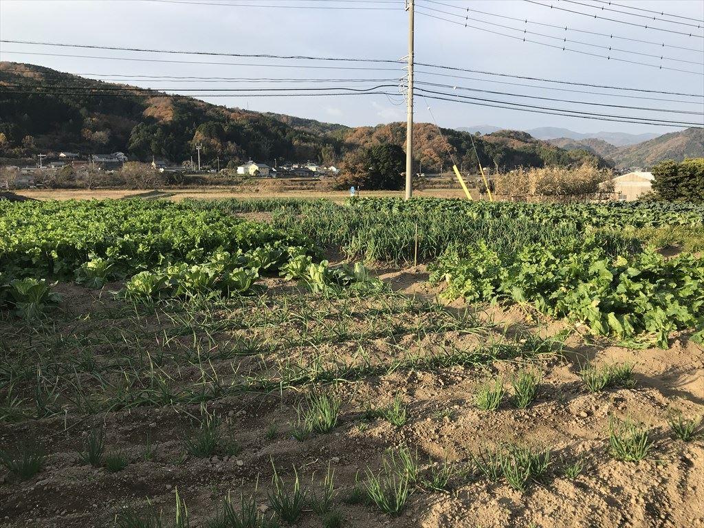 2020年12月の田畑