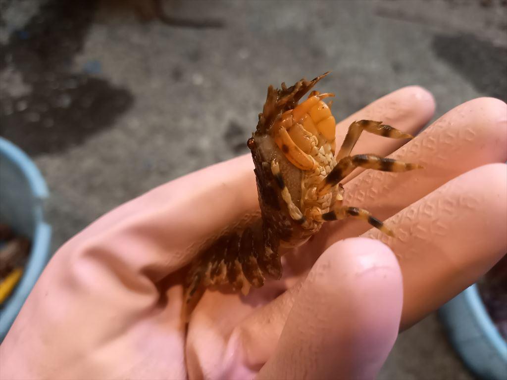 海の小さい生き物